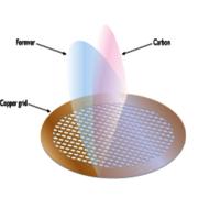 Formvar/Carbon on 200 Mesh Copper (Pack of 25)