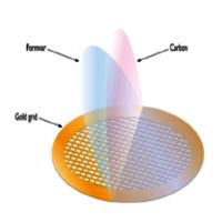 Formvar/Carbon Films on F1 Gold Grids (Pack of 50)