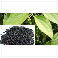 Assam Black Paper Dry & Fresh