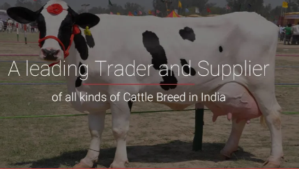 HF Cow Supplier in Bihar