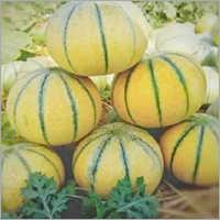 Madhuras Prime Muskmelon Seeds
