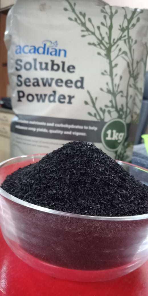 Seaweed Extract