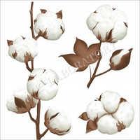 Cotton Fibre Testing Services