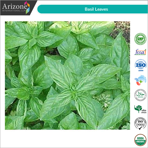 TULSI LEAVES ( HOLY BASIL )