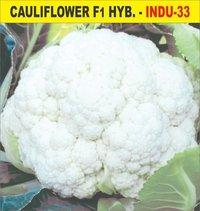 Culiflower Seed