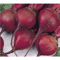 Beetroot Seed