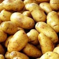 Fresh Pushkar Potato