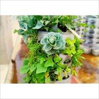 Balcony Vegetable Garden Planter