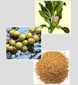 Saptrangi Extract