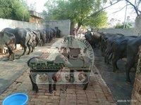 Best Murrah Buffalo Dairy Farm In Haryana