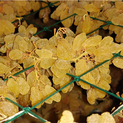Raisin Processing Dry Grapes