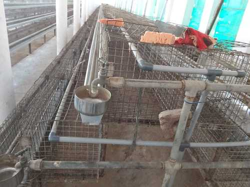 Poultry Brooder Cage