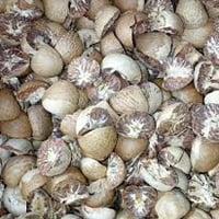 Betal Nut