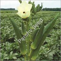Hybrid Okra Bahubali Seeds