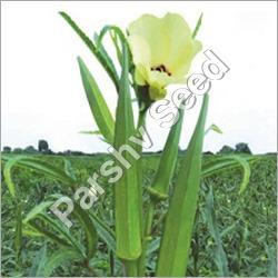 Hybrid Okra Seed Queen 11 Seeds