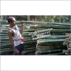 24 Feet Bamboo Pole