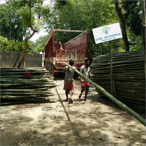 24 Feet Deluxe Bamboo