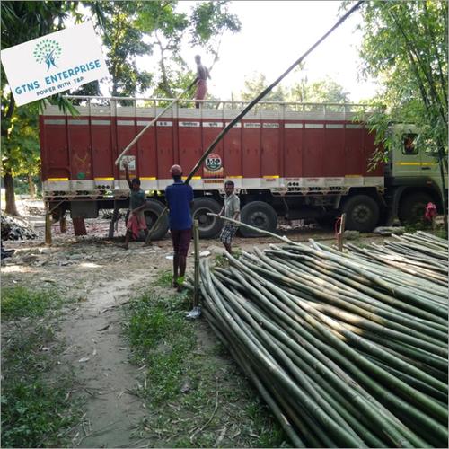 24 Feet Super Bamboo