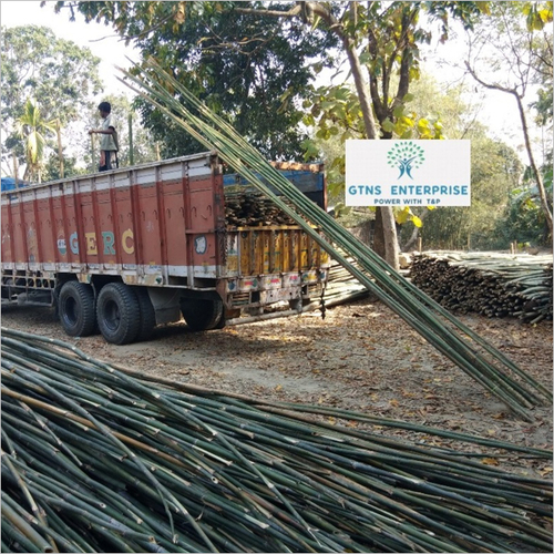 27 Feet Murli / Lagga Bamboo