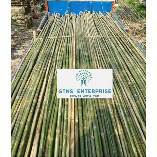 20 Feet Murli / Lagga Bamboo