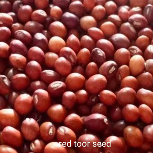 Red Toor Seed