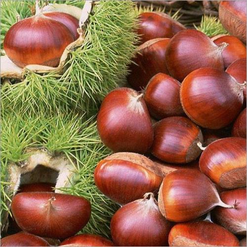Fresh Chestnut Kernel