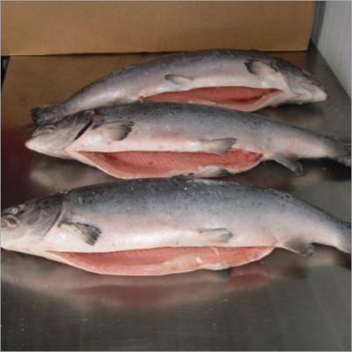 Frozen Salmon Whole And Trout Fish