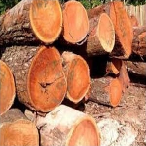 Wood Logs And Sawn Timber