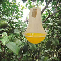 Fruit Fly Insect Trap