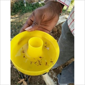 Fruit Fly Plastic Trap