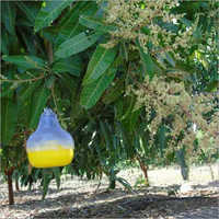 Fruit Fly Pheromone Lure
