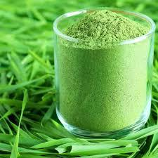 Wheat Green Grass Powder