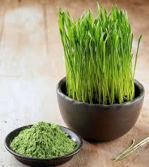 Wheat Green Grass Powder
