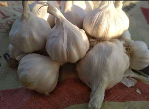 Fresh Dry Garlic