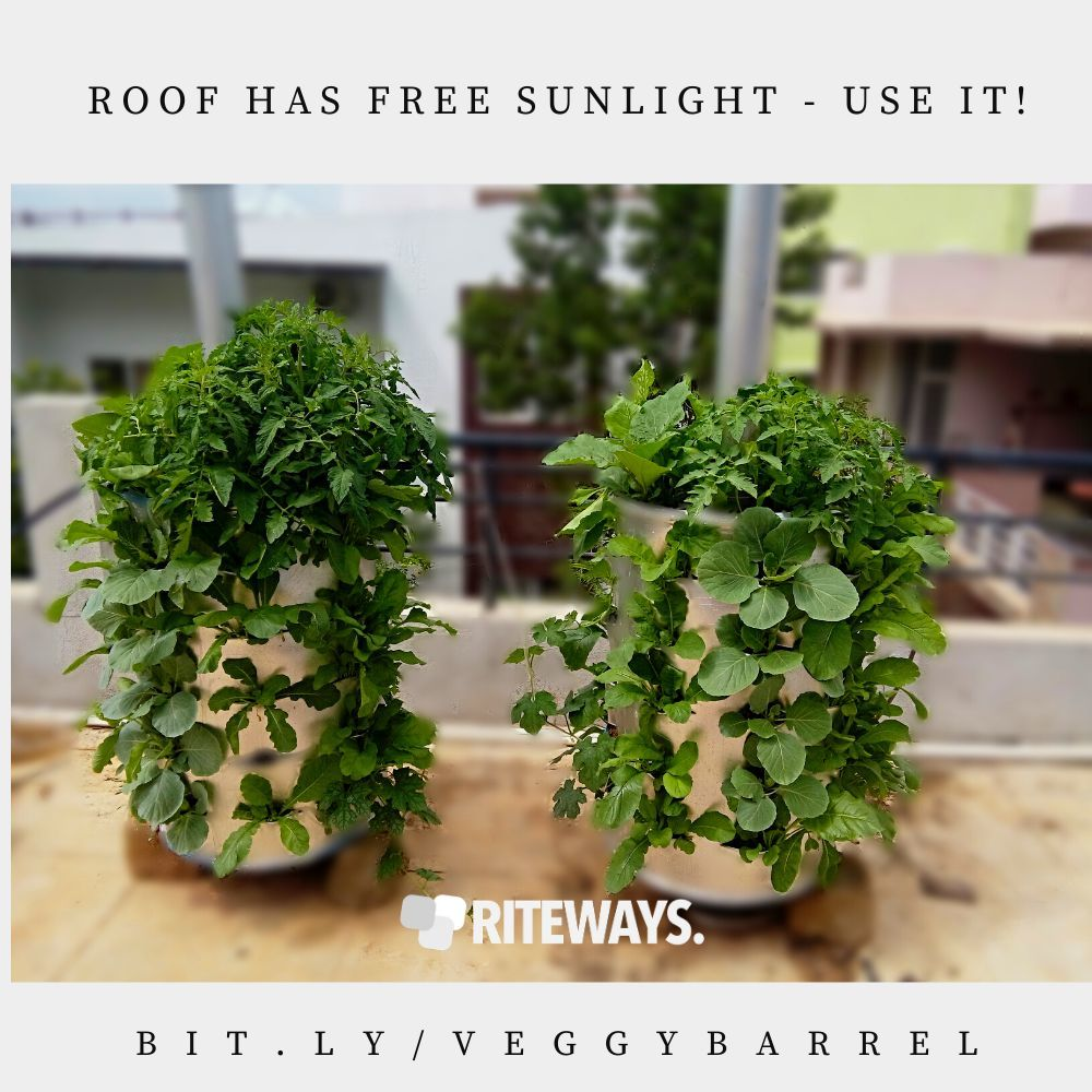 veggyBARREL Roof Garden Container