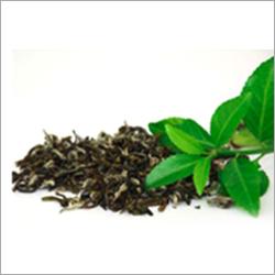 Green Tea Liquid Extract