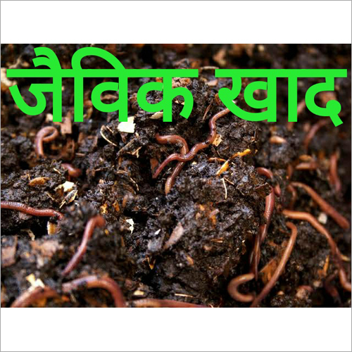 Natural Vermicompost Fertilizer