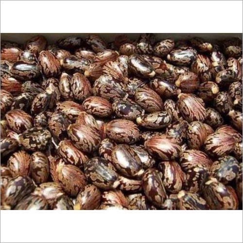 Hybrid Castor Seed