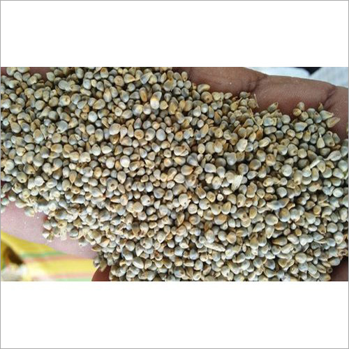 Yellow Millet Seed