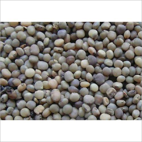 Organic Guar Seed