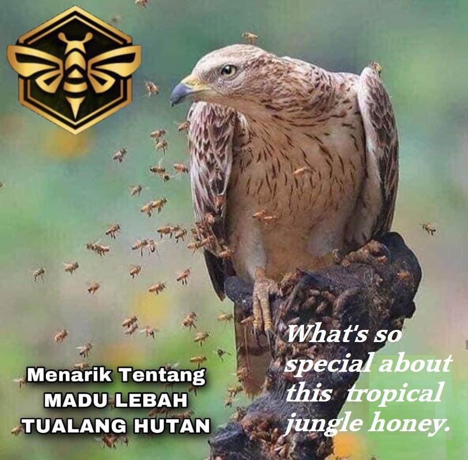 Honey Aura
