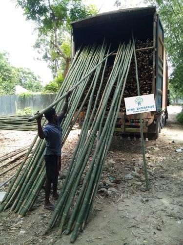 Bamboo Pole ( Jar )
