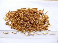 Highly Nutritious Dried Mealworms