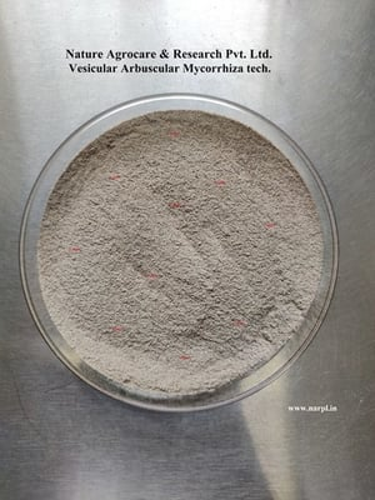 Mycorrhiza Technical