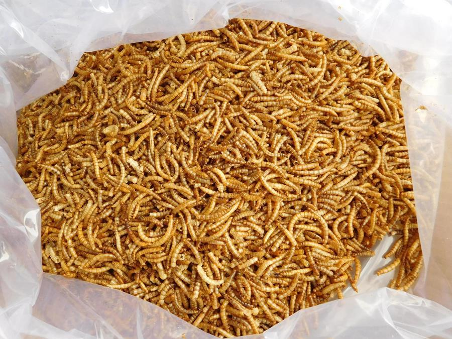 Pet Food Dried Mealworms Tenebrio Molitor