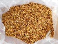 Pet Food Dried Mealworms Tenebrio Molitor