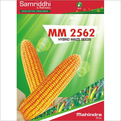 MM 2562 Hybrid Maize Seeds