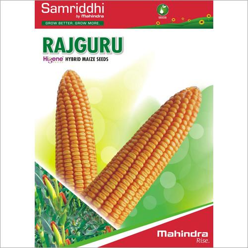 Rajguru Hybrid Maize Seeds