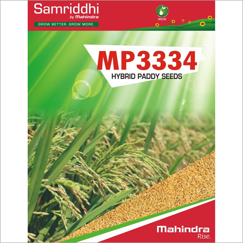 MP 3334 Hybrid Paddy Seeds