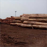 African Wood  Log